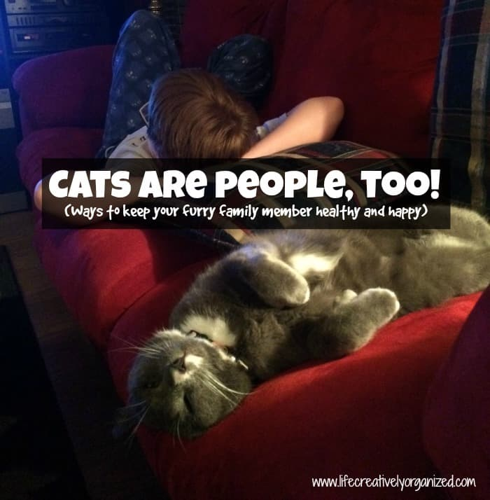 You Judge People On Whether Or Not They Like Cats: LIFE, CREATIVELY ORGANIZED